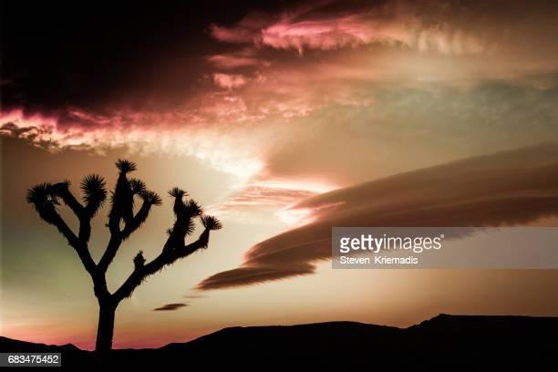 Joshua Tree Cloudscape