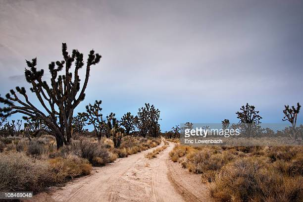 Joshua Tree Forest Road