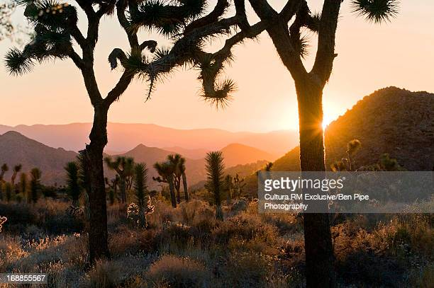Joshua Tree National Park at dusk, California, USA