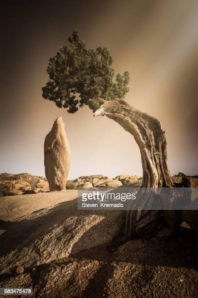 Joshua Tree & Rock Formation