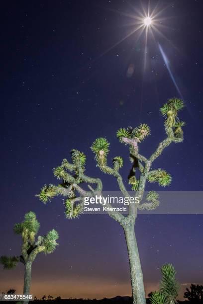 Joshua Tree under a Full Moon