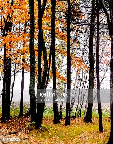 Jour de pluie dans le boisé : Foto de stock