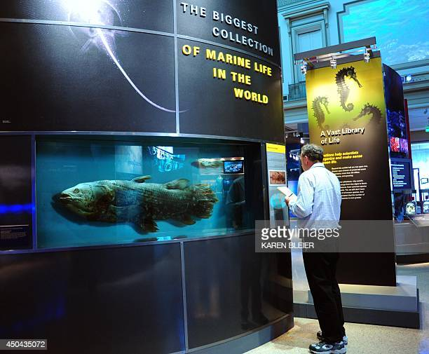 A journalist looks at a coelacanth at the Sant Ocean Hall at the Smithsonian National Museum of Natural History during a press preview September 24...
