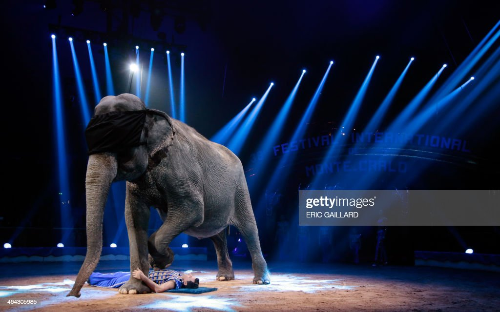 Joy Gartner performs with an elephant during the Award Gala evening of the 38th International Circus Festival of Monte Carlo in Monaco on January 21, 2014. AFP PHOTO POOL / ERIC GAILLARD