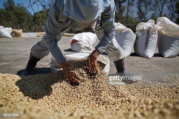 Juan Felipe Lopez bags dry coffee beans at a processing plant near Santiago Atitlan Guatemala on Friday Feb 8 2013 The Guatemalan National Coffee...