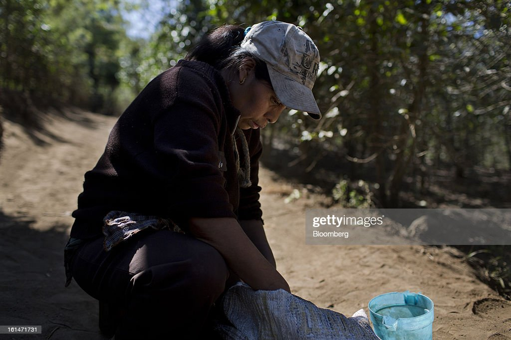 Juana del Rosario Lopez, a coffee production worker, reviews her harvest after picking coffee beans on a small parcel damaged by the roya coffee fungus near Antigua, Guatemala, on Saturday, Feb. 9, 2013. The Guatemala,n National Coffee Association said that rust disease, known as roya in Spanish, will destroy 15 percent of the 2012-2013 harvest and as much as 40 percent of next season's harvest. Photographer: Victor J. Blue/Bloomberg via Getty Images