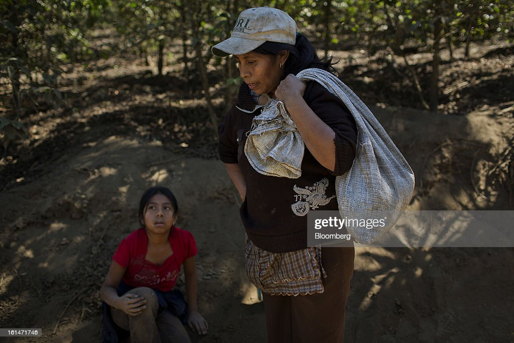 Juana del Rosario Lopez and her daughter Clara, coffee production workers, review their harvest after picking coffee beans on a small parcel damaged by the roya coffee fungus near Antigua, Guatemala, on Saturday, Feb. 9, 2013. The Guatemalan National Coffee Association said that rust disease, known as roya in Spanish, will destroy 15 percent of the 2012-2013 harvest and as much as 40 percent of next season's harvest. Photographer: Victor J. Blue/Bloomberg via Getty Images