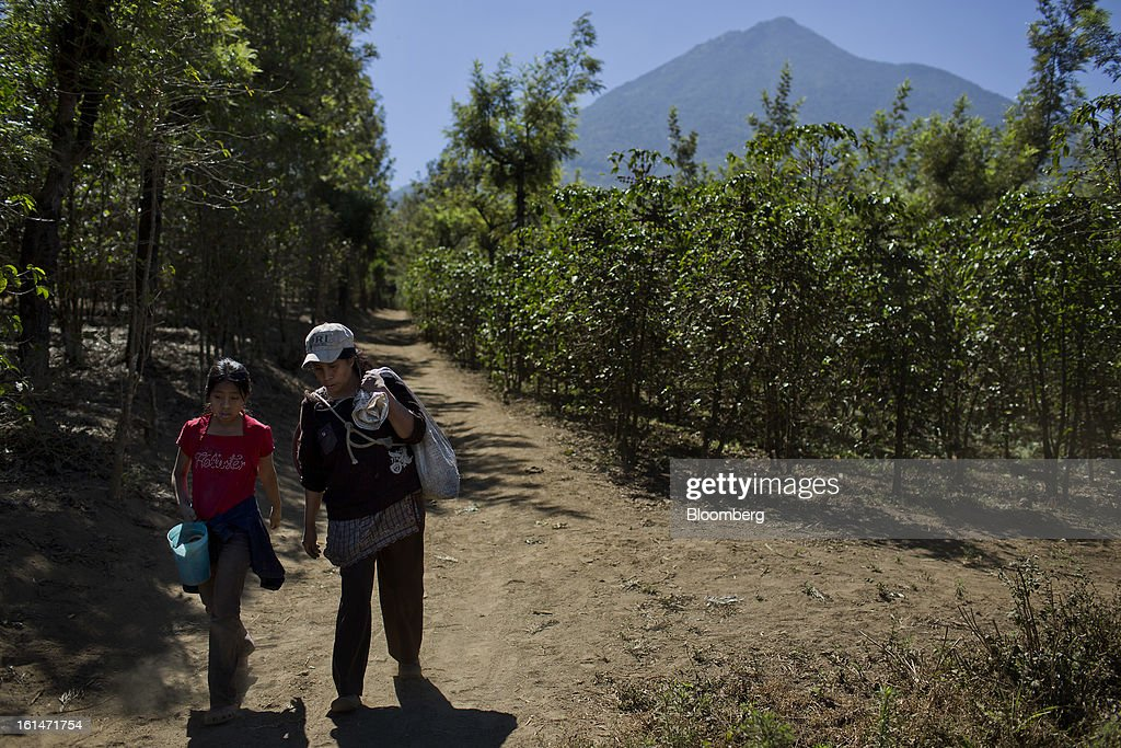 Juana del Rosario Lopez and her daughter Clara, coffee production workers, leave the fields after picking coffee beans on a small parcel damaged by the roya coffee fungus near Antigua, Guatemala, on Saturday, Feb. 9, 2013. The Guatemalan National Coffee Association said that rust disease, known as roya in Spanish, will destroy 15 percent of the 2012-2013 harvest and as much as 40 percent of next season's harvest. Photographer: Victor J. Blue/Bloomberg via Getty Images
