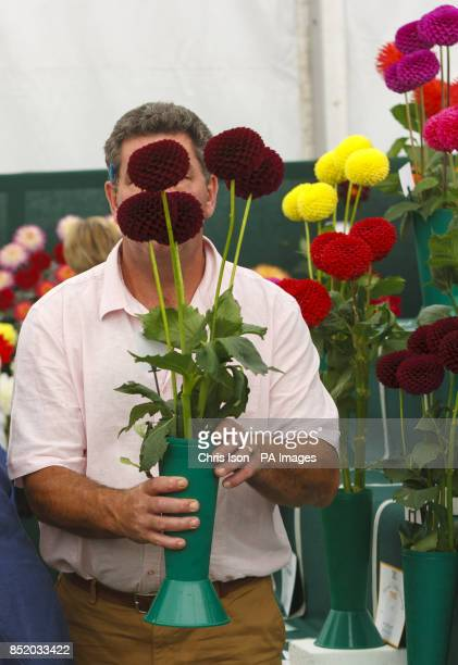 A Judge closely inspect flowers at the National Dahlia Society's Annual Show at RHS Wisley in Surrey around 100 exhibitors entered the 80 classes...