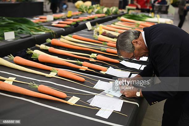 A judge makes notes next to entrys in the 'mixed root vegetable competition' at the Harrogate Autumn Flower Show in northern England on September 18...