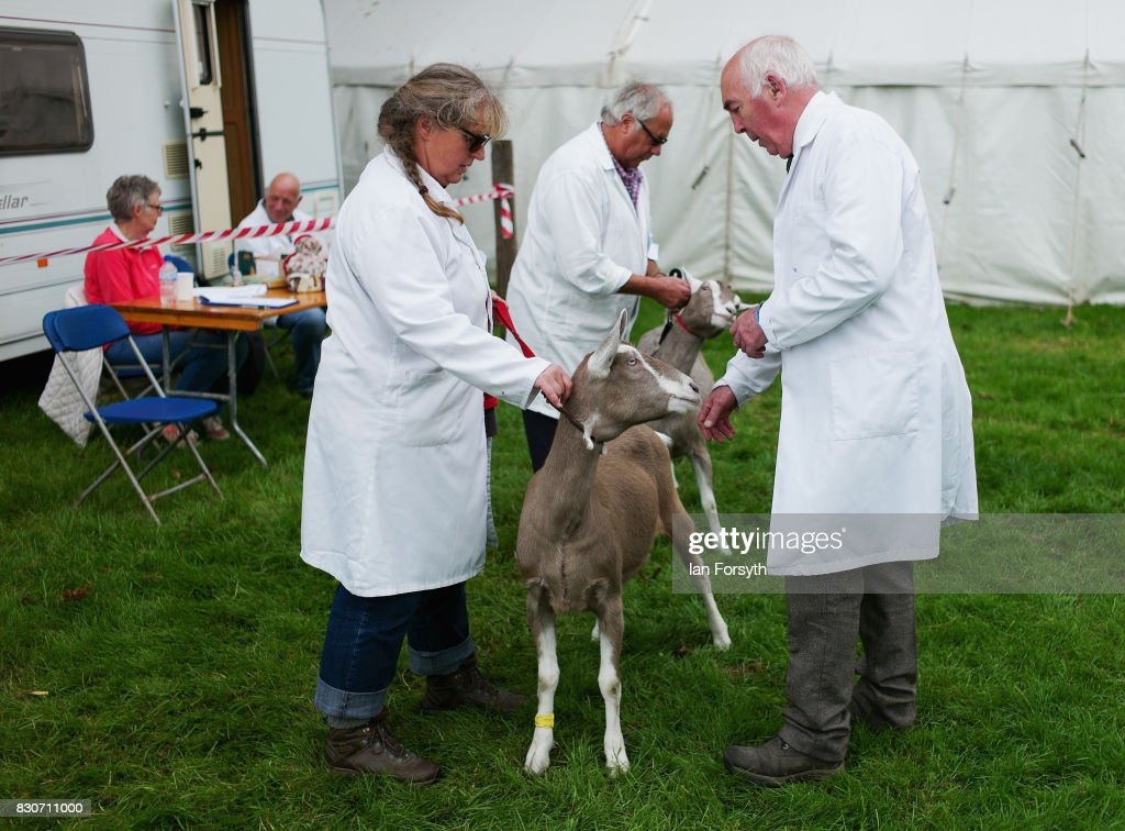 A judge (R) views goats during the 194th Sedgefield Show on August 12, 2017 in Sedgefield, England. The annual show is held on the second Saturday each August and is a celebration of agricultural and country life. It offers a range of competitive classes which represent the many skills and aspects of life in the local community, and the countryside including animal classes, vintage machinery and handicrafts.