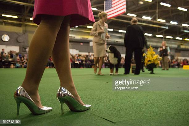 A judge watches a dog receive its award in the ring on the second day of the 140th annual Westminster Kennel Club dog show on February 16 2016 in New...