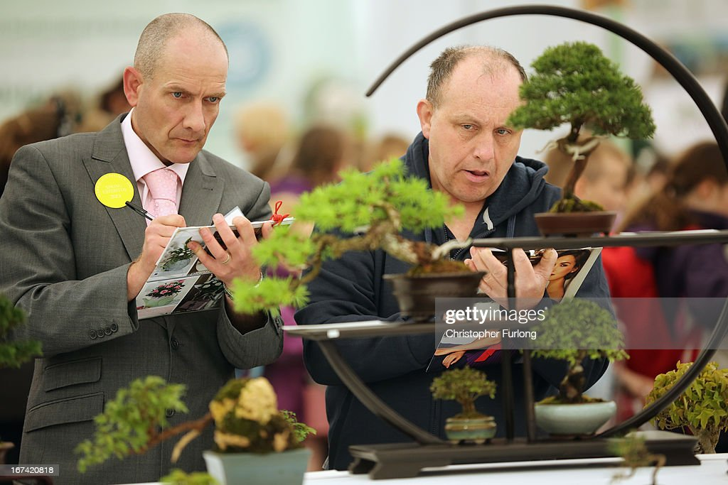 Judges cast their expert eyes over bonsai trees at the Harrogate Spring Flower Show on April 25, 2013 in Harrogate, England. Over 100 nurseries are staging displays of their flowers and plants at the Harrogate Spring Show organised by the north of England Horticultural Society. The premier gardening event of the north attracts thousands of horticulturalists to view it's show gardens and Spring floral displays.