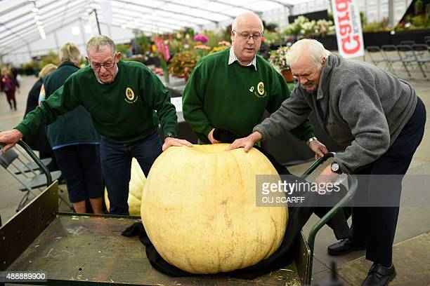 Judges prepare to weigh a 123kg pumpkin entered in the 'Giant Vegetable Competition' at the Harrogate Autumn Flower Show in northern England on...