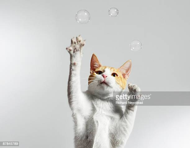 Juggling Cat