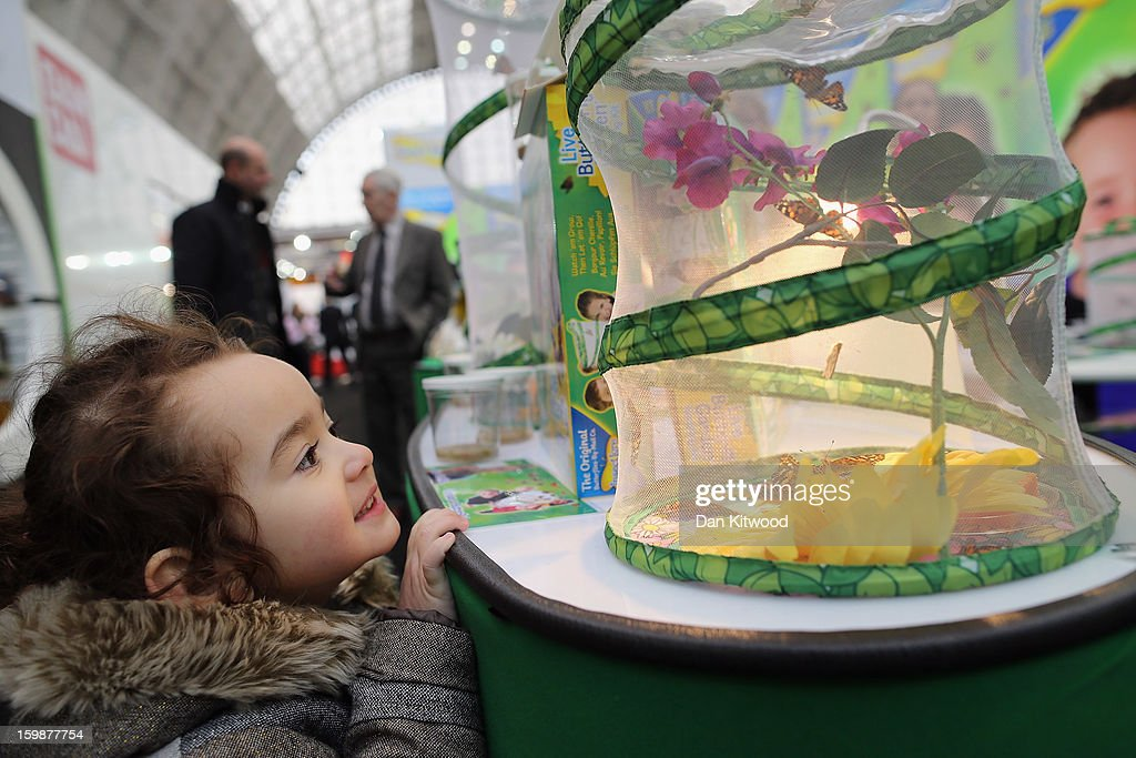 Juliet Quispe Palacios, 3, from London looks at a stand with real Butterflies hatching during the 2013 London Toy Fair at Olympia Exhibition Centre on January 22, 2013 in London, England. The annual fair which is organised by the British Toy and Hobby Association, brings together toy manufacturers and retailers from around the world.