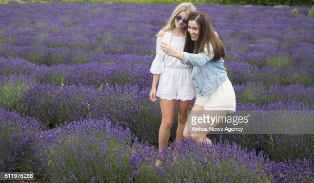 People pose for photos among lavender plants at a lavender farm during the 2017 Lavender Festival in Prince Edward County Ontario Canada July 9 2017