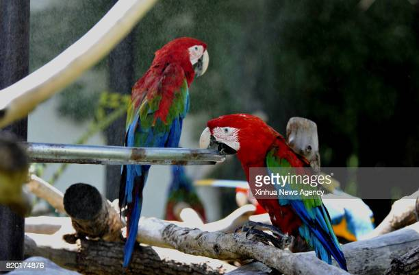 SHANGHAI July 21 2017 Scarlet macaws enjoy spraycooling at Shanghai Zoo in east China's Shanghai July 21 2017 The meteorological department of east...