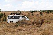 NAIROBI July 27 2016 Tourists take photos of a lion at Maasai Mara National Reserve Kenya July 24 2016 Kenya has recorded minimal wildlife attacks on...