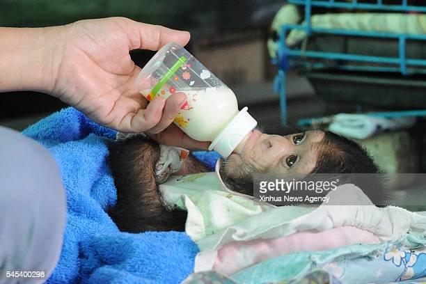 PRAKARN July 7 2016 A baby chimpanzee drinks milk at Samut Prakarn Crocodile Farm and Zoo in Samut Prakarn province Thailand July 7 2016