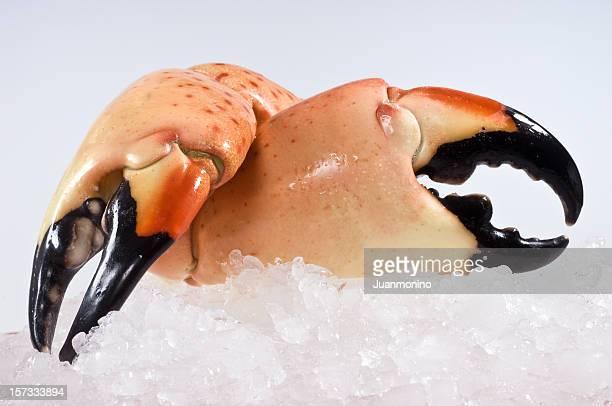 Pinces de crabe géant