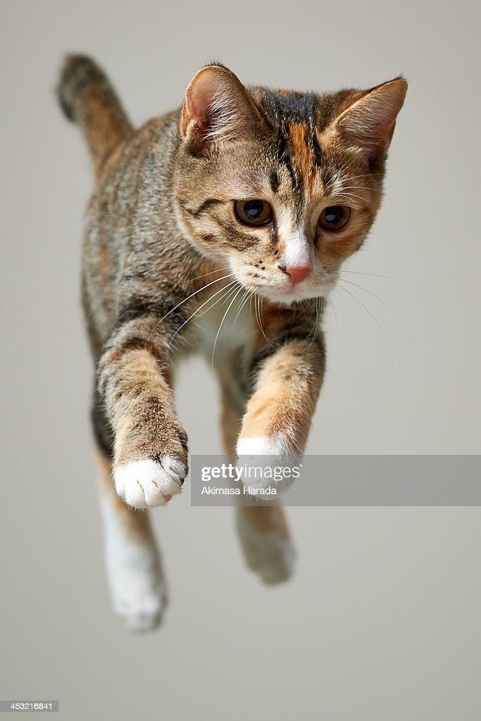 Jump kitten : Stock Photo