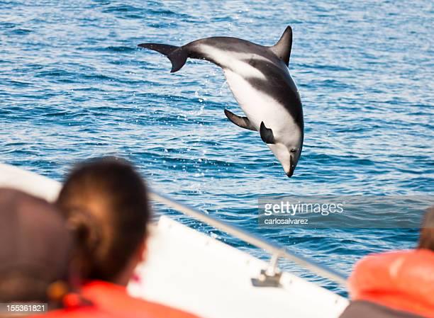 Dolphin von einem Boot springen