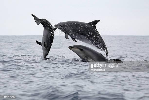 Saltar golfinhos
