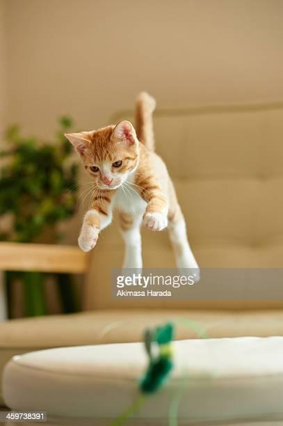 Jumping Ginger Kitten