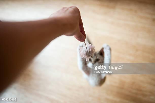 Jumping Pets