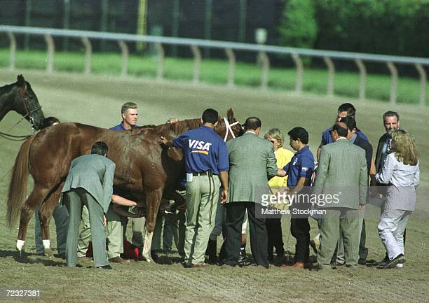 Charismatic is examined after pulling up after the 131st Belmont Stakes at Belmont Park in Elmont New York Charismatic placed 3rd Mandatory Credit...
