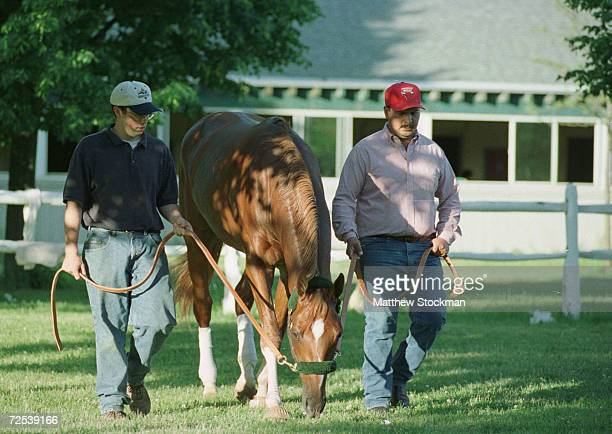 Charismatic lead by Andy Rehm and Rafael Castellanos grazes after morning workouts in preparation for the 131st Belmont Stakes at Belmont Park in...