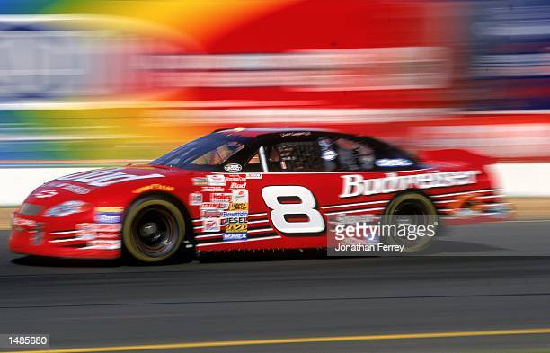 Dale Earnhardt Jr #8 who drives the Chevrolet Monte Carlo speeds down the track during the Save Mart/Kragen 350 presented by NAPA part of the NASCAR...