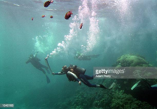 Wendy CraigDuncan a Marine Biologist on the Great Barrier Reef Australiacarries the Olympic torch underwater on day 20 of the 2000 Sydney Olympic...
