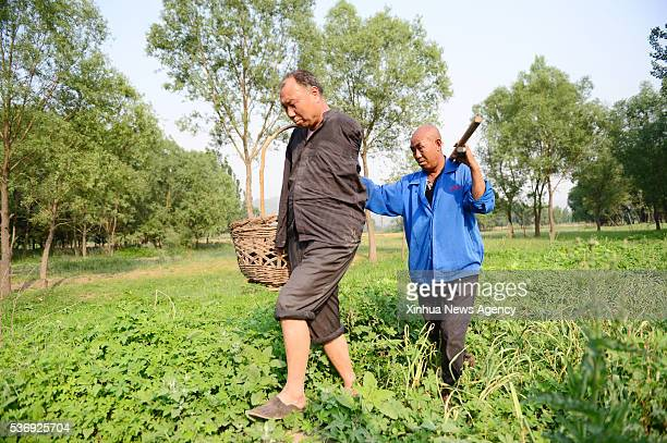 SHIJIAZHUANG June 1 2016 Jia Wenqi left and his friend Jia Haixia walk in the field in Yeli Village of Jingxing County north China's Hebei Province...