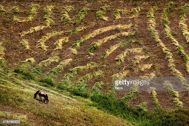 June 1 Lerik District Azerbaijan A horse grazes on a hill next to land ploughed for cultivation in Lerik a district in the southern part of...