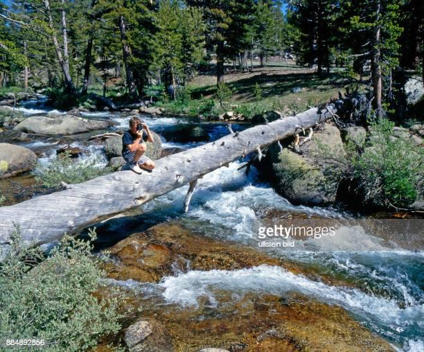 Junger Mann fotografiert auf einem gefallenem Riesenbaum im Yosemite NP in der Sierra Nevada in den USA
