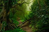 Jungla muy verde al norte de Tailandia con árbol caído en el camino