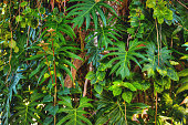 Dense tropical plant growth background.