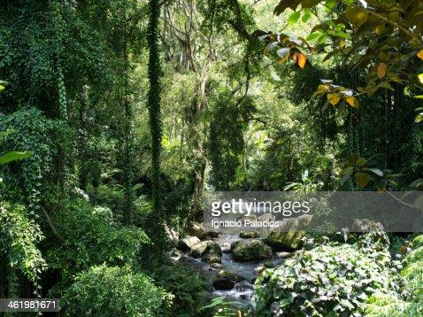Jungle  in Ubud