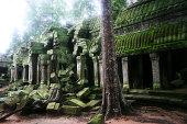 Jungle is taking over at Angkor wat.