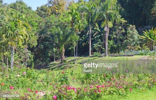 jungle park : Stockfoto