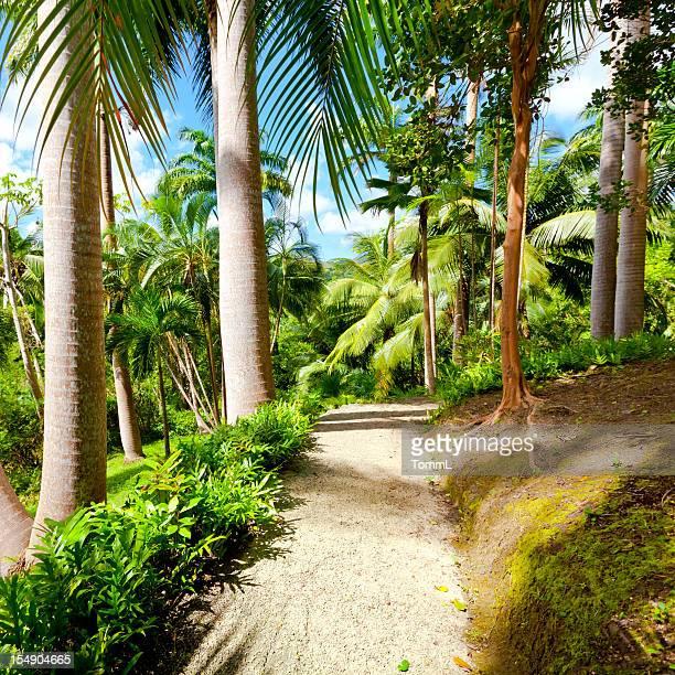 Caminho na selva
