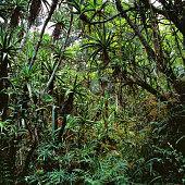 jungle, africa, congo, tree, forest, branch, hot, leaves, landscape, rainforest