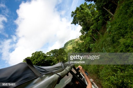 Jungle safari adventure : Stock Photo