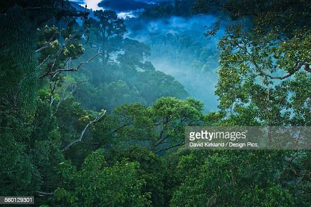 Jungle scene on canopy walk at Ulu Temburong National Park