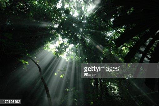 Jungle sunbeam: Horizontal