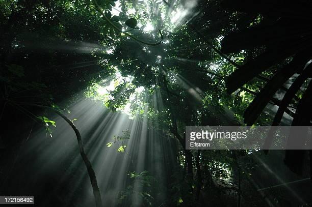Jungle Rayon de soleil: Horizontal
