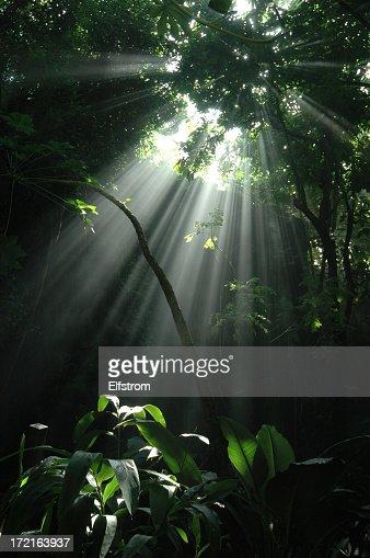 Jungle sunbeam: Vertical