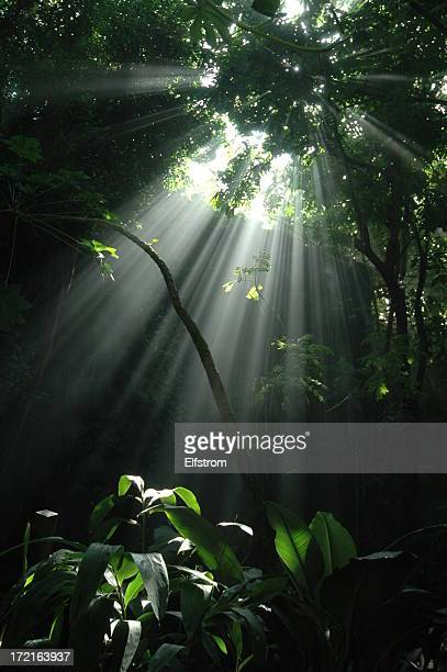 Jungle sunbeam: Vertical